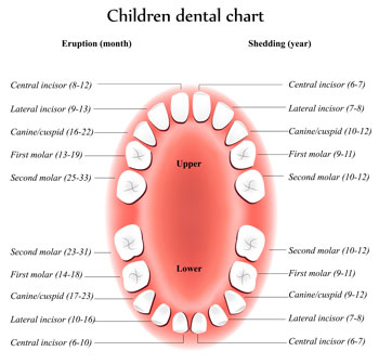 Tooth Eruption Chart - Pediatric Dentist in Poway, CA